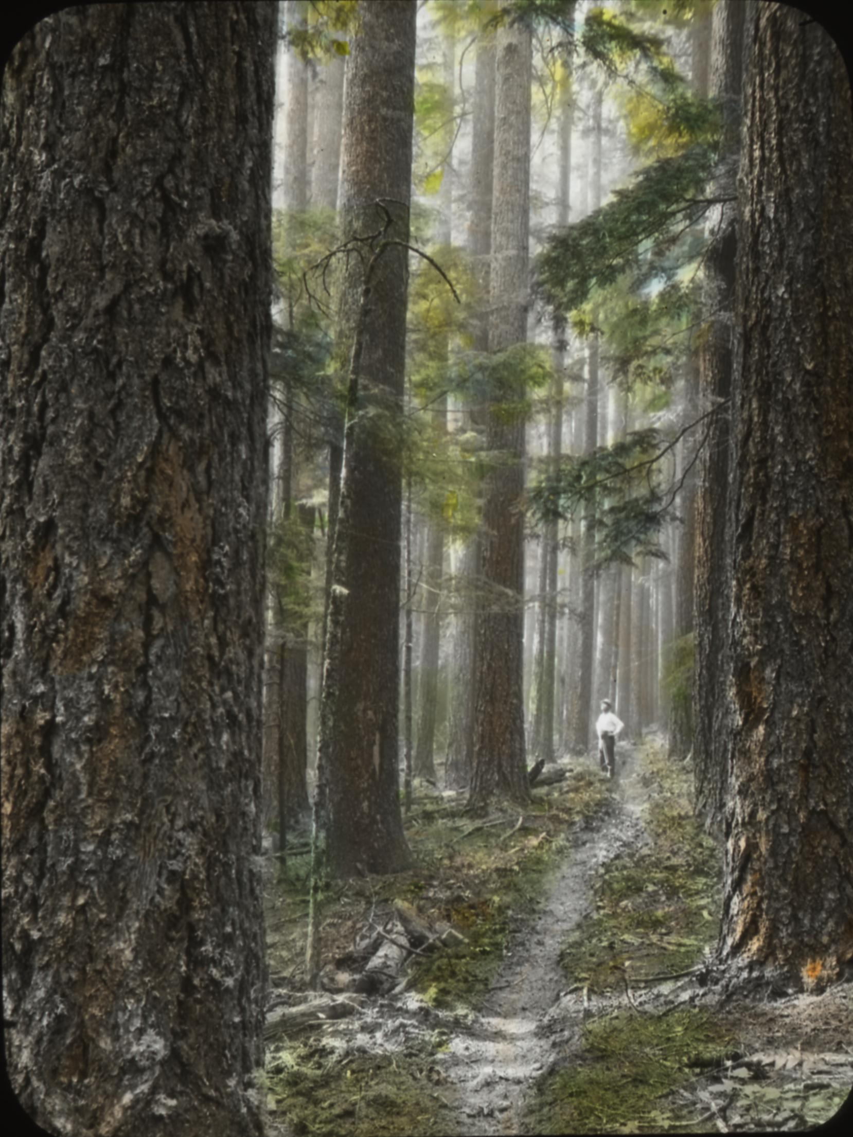 Typical Oregon forest: enchanting and peaceful | Flickr ...