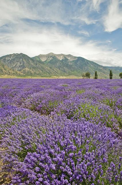 Lavender Fields Day Spa Ormond Beach Reviews