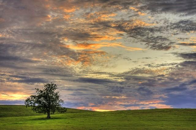 One Tree, One Sky