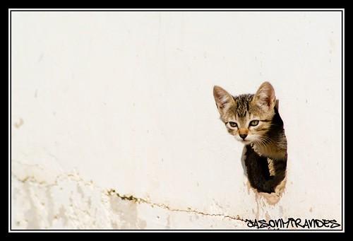 Curiosity kill the cat