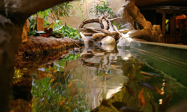 Fish Tank - African Rain Forest A different perspective on ...
