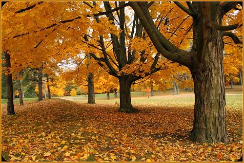 autumn ontario canada fall londonontario