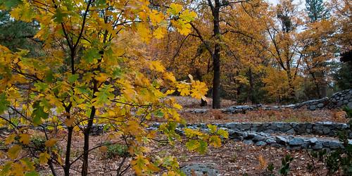 landscape idyllwild sdosremedios size1x2 ©stevendosremedios