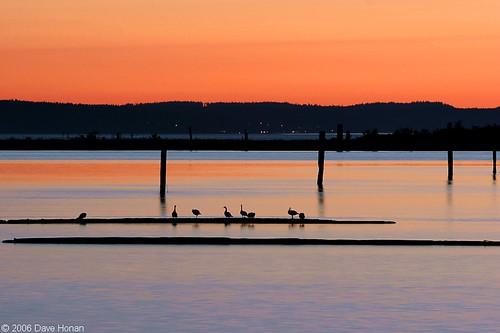 sunset birds pugetsound sunrisesunset perfectsunsetssunrisesandskys