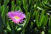 Hermosa flor de la mañana