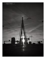 Erasmus Bridge in Symmetry