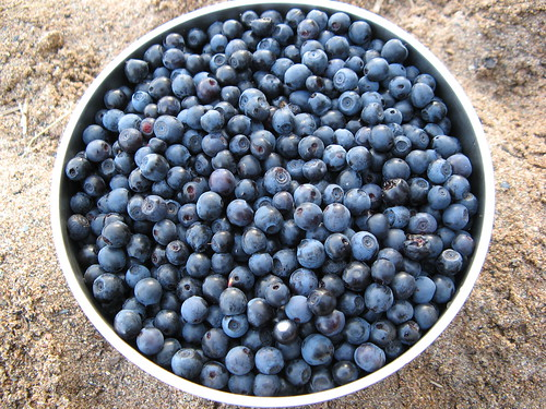 Blaubeeren - Fruitpicking in Down Under