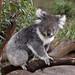 Australia 09