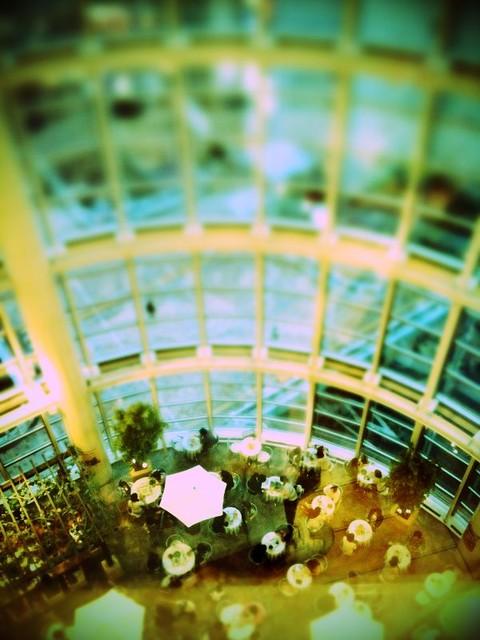 草 2009/10/03 cafe20091003