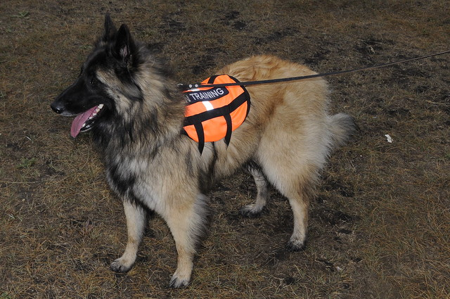 Search And Rescue Dog Training Edmonton