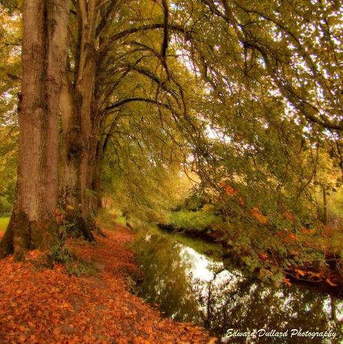 autumn kilkenny ireland tree fall nature leaves automne river landscape stream eire paysage photoart otono cillchainnigh edwarddullard