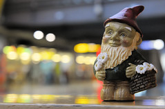 A Gnome In Transit
