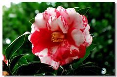 091229 賞花