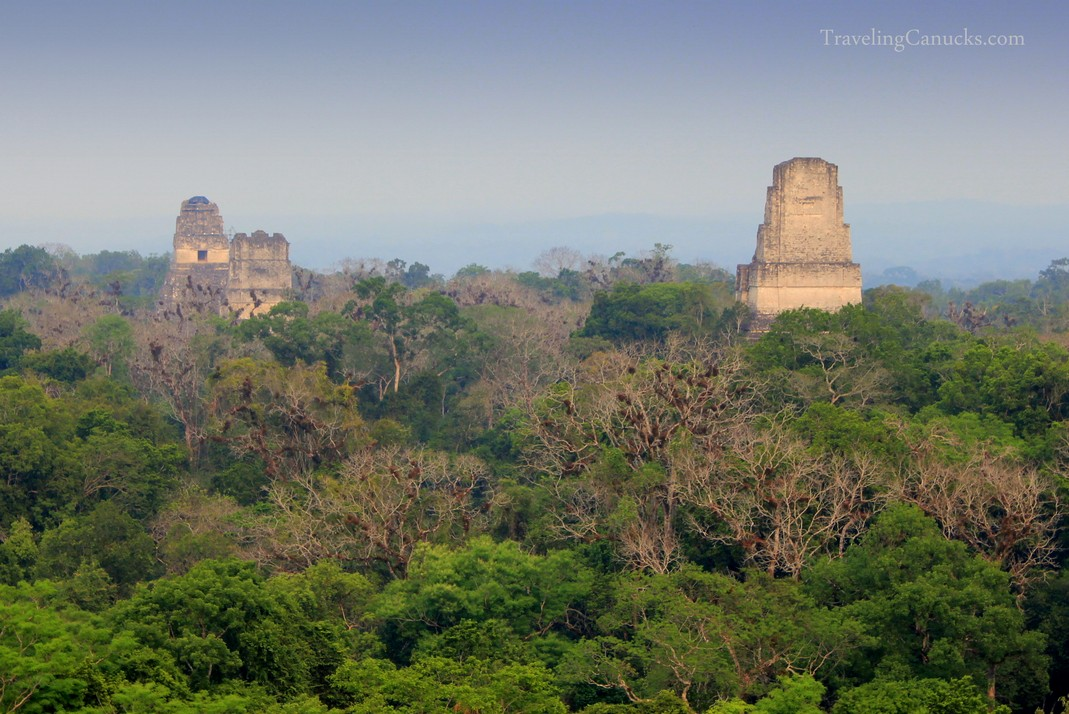 Mayan Pyramids above the Jungle Canopy of Tikal National Park Guatemala & Pyramids above the Jungle Canopy of Tikal in Guatemala