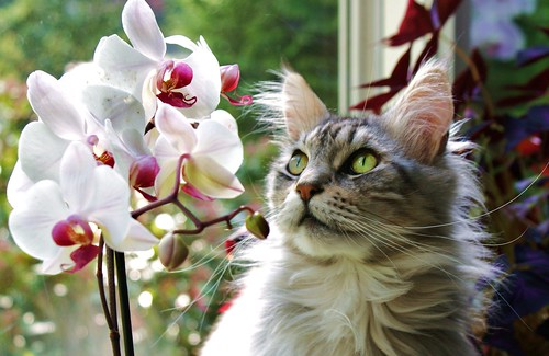 Floris admiring the orchids.