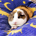 Balbinka the Pillow Piggie by pyza*