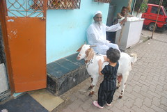I Taught My Grand Daughter Marziya Shakir To Love Animals by firoze shakir photographerno1