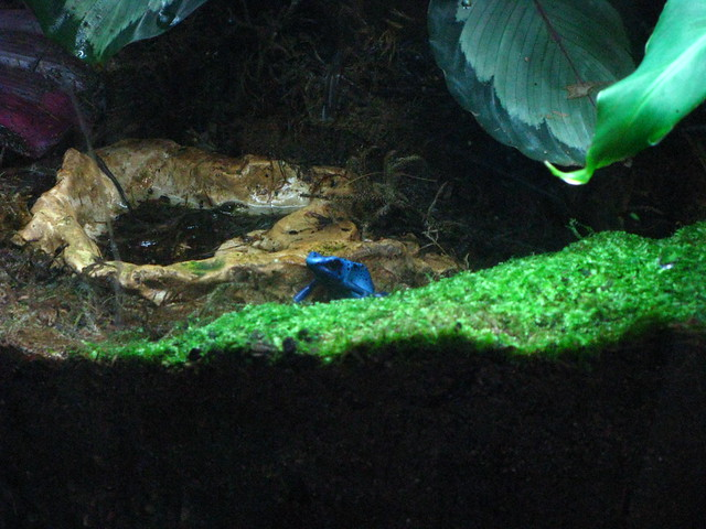 Shedd Aquarium 5230 Flickr Photo Sharing