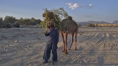 pakistan mountain nature landscapes desert arid rivervalley ecotourism balochistan hingol makran protectedareasinpakistan nationalparksinpakistan lasbela hingolnationalpark conservationinpakistan aridmountains mekran placestovisitinpakistan tourisminpakistan thebeautyofpakistan natureinpakistan offroadclubpakistan ecosystemsinpakistan ecotourisminpakistan winterlandscapesinpakistan pakistansnaturalheritage desertsofpakistan aridlandscapesinpakistan aridlandscapesoftheworld beautifullandscapesinpakistan beautifulareasinpakistan thebeautyofbalochistan balochistansnaturalheritage balochistangeography balochistaninjanuary winterinbalochistan abalochistanwinter hungolnationalpark mountainrangesinpakistan themountainrangesofbalochistan aridmountainsinpakistan winterlandscapesinbalochistan offroadclubpakistantriptohingolnationalparkjanuary2011 tourisminbalochistan