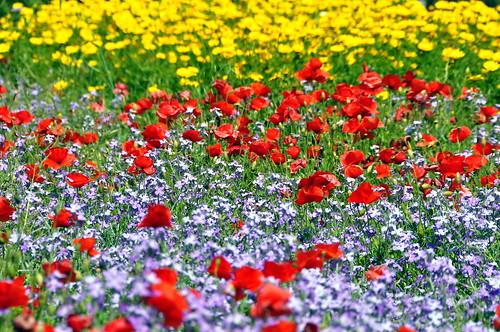 flowers primavera spring fiori marsala petrosino
