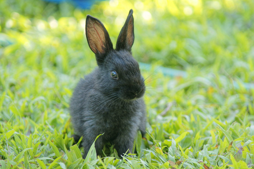 Rabbits...