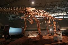 Mamenchisaurus - 05