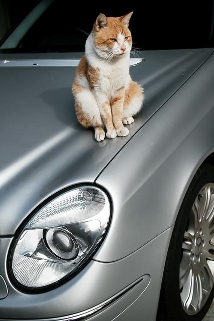 It's my Benz!