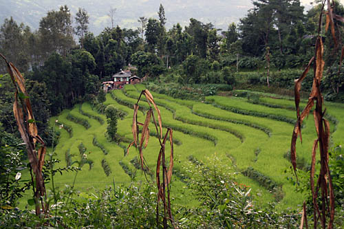 Terraced paddy fields flickr photo sharing for Terrace farming in india