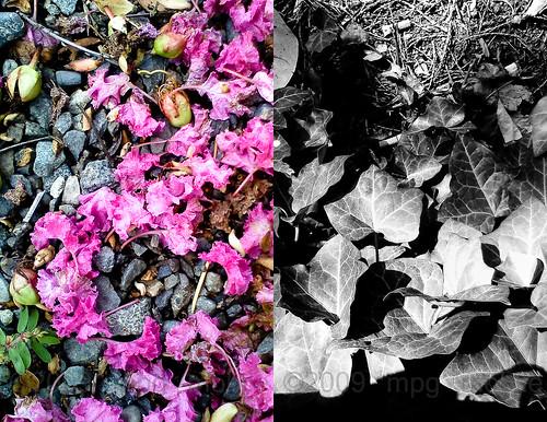 stones & petals