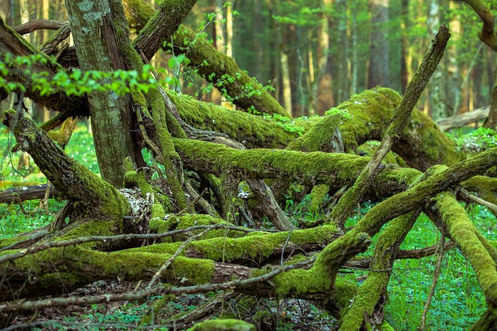 Białowieski Park Narodowy Bialowieza National Park Flickr