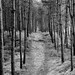 Small photo of Forest