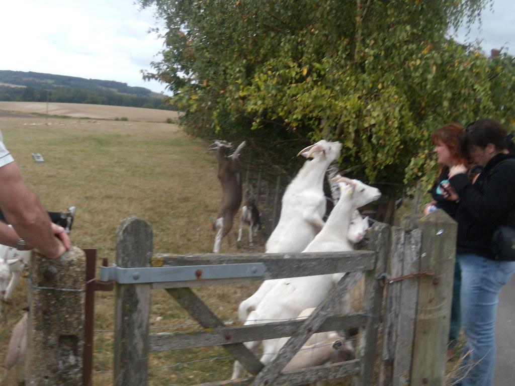 Goats Wye Circular