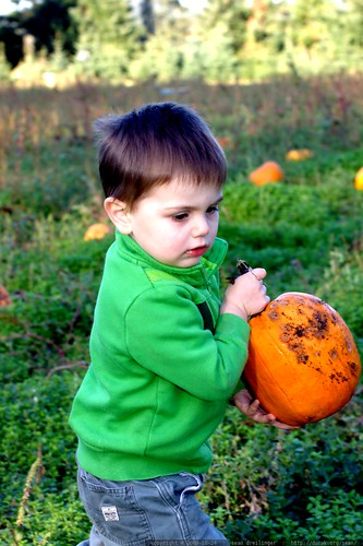 putting back a pumpkin that grossed him out    MG 6740