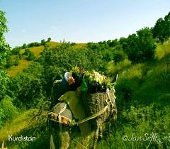 کردستان    Kurdistan