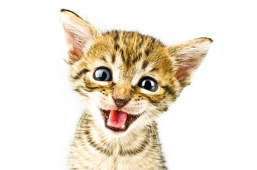 Crazy Meow ~ RazorMonkey Magazine Cover ~ - 無料写真検索fotoq