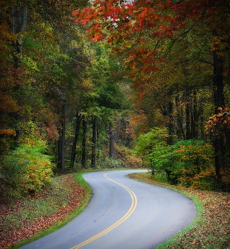 autumn fall virginia nationalpark foliage blueridgeparkway