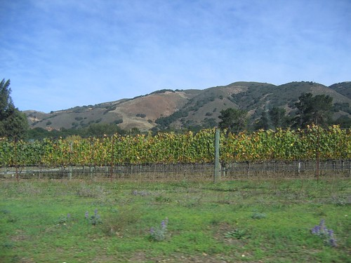 monterey ca vineyards