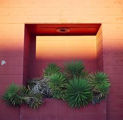 Palms, Monroe, LA. 2009
