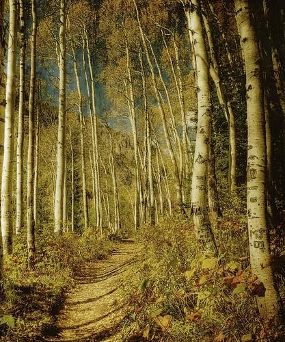 autumn light forest colorado afternoon shadows hiking path trail hdr textured kartpostal boothfallstrail