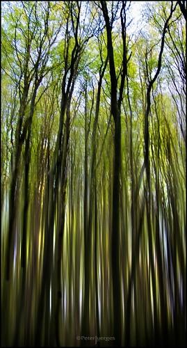 trees superaplus aplusphoto