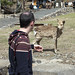 My Brother, The Deer Whisperer