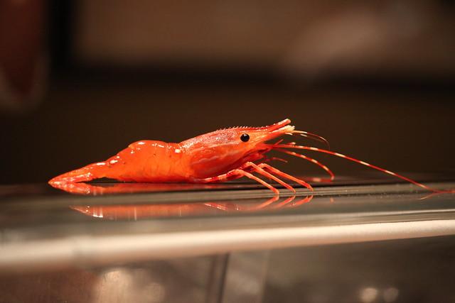 Live Shrimp | Flickr - Photo Sharing!