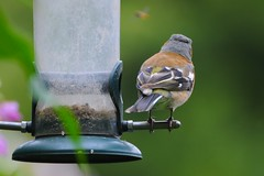 animal, macro photography, green, fauna, bird feeder, close-up, bird,