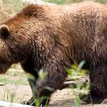 Woodland Park Zoo Seattle 077