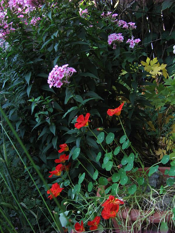 jungle du mois d'août