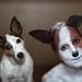 Basil's evil twin by ApplesInMyBra