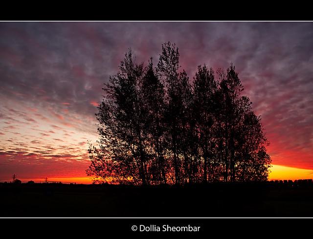 Sunrise @ Delfland