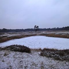 Frozen pond on Heidestein estate