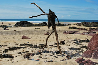 Driftwood Dancer
