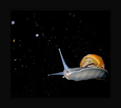 snails in space